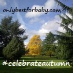 Celebrate Autumn Linky